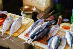 Sale of fish in the street market in Vietnam Royalty Free Stock Images