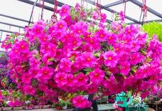 Sale of flower seedlings on the market in Riga.Latvia stock image