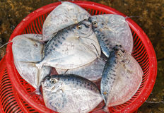 Sale of Fresh fish in the street market in Vietnam Stock Photography