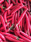 Chili with red Spicy widely used to make food. royalty free stock image
