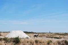 Sale los campos en Ile de Re, La Rochelle Foto de archivo libre de regalías