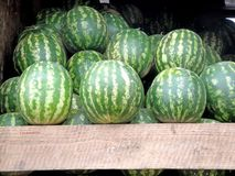 The harvest of watermelons in Tbilisi Royalty Free Stock Photos