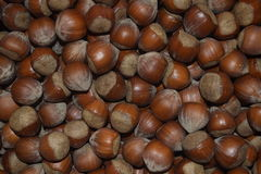 Sale of nuts. Hazelnuts in bulk is a lot of. The hazelnuts fresh is a lot of. A filbert. Нazelnuts sale. Tasty food stock photo