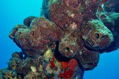 Sale Pier Sponges Immagini Stock