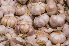 Sale of products in the market. Big young garlic. Spices. Background and texture. Healthy food. stock images