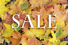 Sale sign on autumn leaves background Royalty Free Stock Image