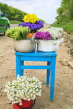 Sale of spring flowers by the roadside Stock Photos