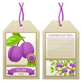 Sale tag of seedlings plum trees. Instructions for planting tree Royalty Free Stock Image