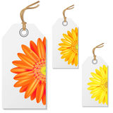 Sale Tags With Gerbers Stock Photo