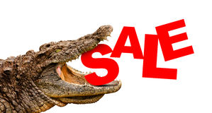 Sale text eaten by crocodile for. Clipping path included! Ready for print or web page. High resolution color image Stock Image