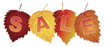 Sale Text on Fall Colors Birch Leaves Vector Illustration Stock Image