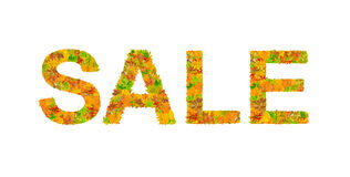 SALE word made of autumn leaves isolated on white Stock Images