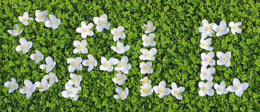 Sale. Young green carpet of clover and Jasmine flowers, the written word sale Royalty Free Stock Photo