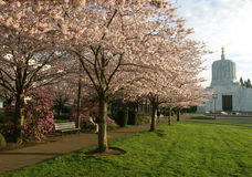 Salem Oregon Park. Salem, Oregon park in spring, with flowering cherry trees, with Oregon Capitol in background Stock Photography