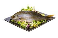 Salema钉头鱼- sarpa鱼 图库摄影