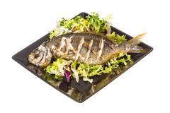 Salema porgy - sarpa fish Royalty Free Stock Photography