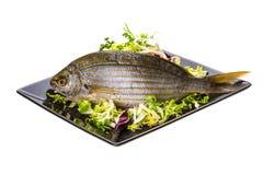 Salema porgy - sarpa fish Stock Photography