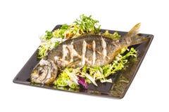 Salema porgy - sarpa fish Royalty Free Stock Image