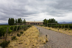 Salentein Vineyard Mendoza Argentina Stock Photos
