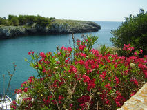 Salento coast. A view of the italian coast of Salento with oleanders Stock Image