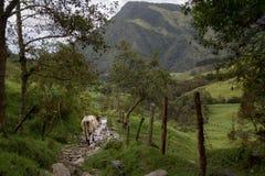 Salento, Colombia fotografia stock libera da diritti