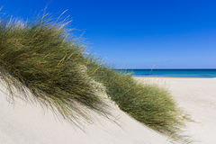 Salento, sand dunes. Salento Lecce: the sea, the beach and sand dunes royalty free stock image