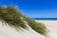 Salento sanddyn Royaltyfri Bild