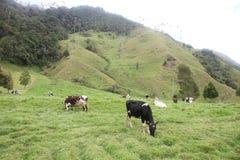 Salento y la granja imagen de archivo
