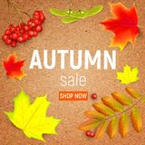 Sales banner on a crafting paper with maple autumn leaves and rowan branches with ashberry . Autumn maple leaf and rowan. Sales banner on a crafting paper with Royalty Free Stock Image