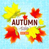 Sales banner with maple autumn leaves.. Sales banner with maple autumn leaves. Sales banner with maple autumn leaves on blue background. Maple leaf. Vector Stock Images