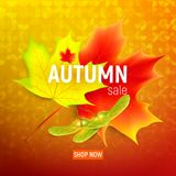 Sales banner with maple autumn leaves. Isolated autumn leaves. Maple leaf. Autumn maple leaf on a orange background. Vector illustration Stock Photography