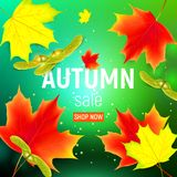 Sales banner with maple autumn leaves.. Sales banner with maple autumn leaves on green background. Maple leaf. Vector illustration Royalty Free Stock Images