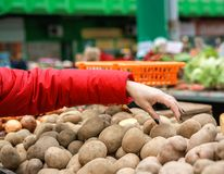 Sales of fresh and organic vegetables at the green market or farmers market in Belgrade during weekend. female choosing the best royalty free stock images