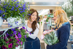 Salesgirl Assisting Customer In Buying Flower Royalty Free Stock Photography