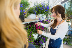Salesgirl Showing Flower Plant To Customer In Shop Royalty Free Stock Photography