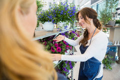 Salesgirl Showing Flower Plant To Customer In Shop Stock Image