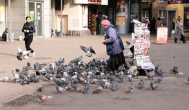 Saleswoman is feeding pigeons. Old saleswoman, which sells the newspapers, is feeding pigeons in center of Moscow city Royalty Free Stock Photos