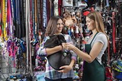 Saleswoman Playing With French Bulldog Carried By Customer. Smiling saleswoman playing with French Bulldog carried by customer in store Royalty Free Stock Photo