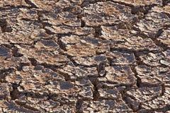 Saleté criquée dans le magma sec de cattail Photo stock