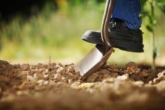Saleté de creusement Images libres de droits