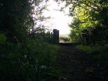 Salga de arbustos Fotos de archivo libres de regalías