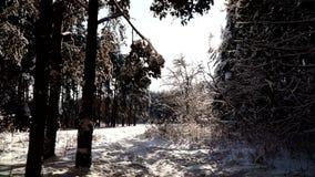 Salga del bosque del invierno a un prado soleado Tiro estabilizado del pov del cardán almacen de metraje de vídeo