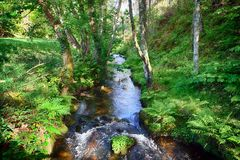 Salgadelos rill and forest in the province of Lugo in Spain. Little runlet in a quiet corner in the village of Sargadelos in the north of Galicia in Spain Royalty Free Stock Images