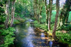 Salgadelos rill and forest in the province of Lugo in Spain. Little runlet in a quiet corner in the village of Sargadelos in the north of Galicia in Spain Stock Photo