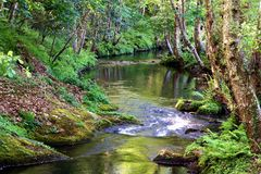 Salgadelos rill and forest in the province of Lugo in Spain. Little runlet in a quiet corner in the village of Sargadelos in the north of Galicia in Spain Royalty Free Stock Photos