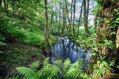 Salgadelosril en bos in de provincie van Lugo in Spanje Stock Foto's