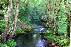 Salgadelosril en bos in de provincie van Lugo in Spanje Royalty-vrije Stock Fotografie