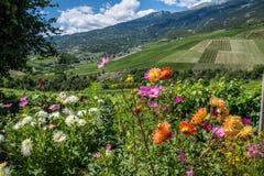 Salgesch, Zwitsers Valais, royalty-vrije stock foto