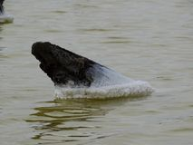 Salgue acordos em tudo que cai na água do lago Fotografia de Stock