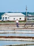 Salgue bandejas do sicciole, Pirano, Eslovênia, Europa Fotografia de Stock